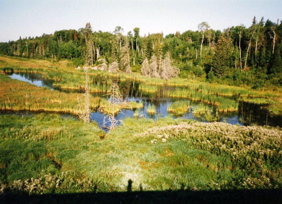 Sometimes it's hot...I love Minnesota swamps...