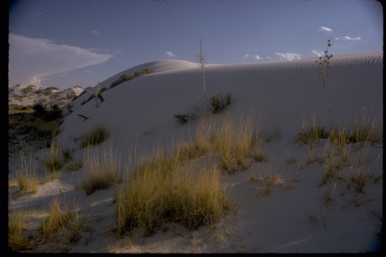 National Park photo of White Sands National Monument.