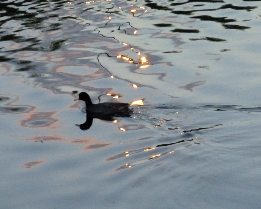 A reflective duck.