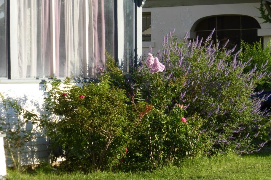 A lavender theme.