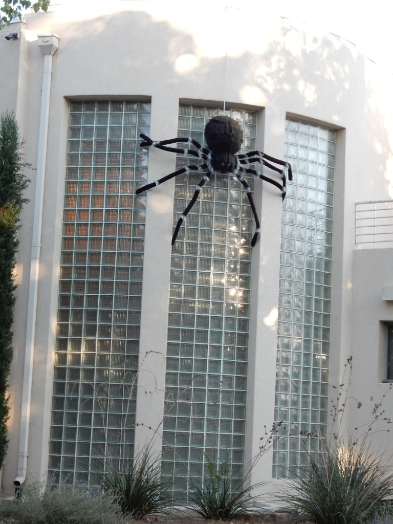 Why was I worried about Botswana spiders...they're way bigger here.