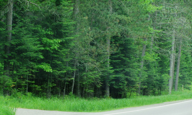 I understand Siberia has a lot of trees. A LOT.